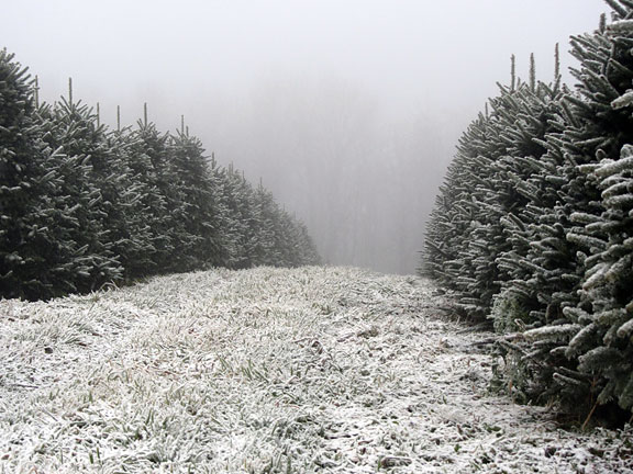 Greene Tree Farm Choose and Cut Christmas Trees Boone NC Christmas Tree Farms in the Blue Ridge Mountains of North Carolina
