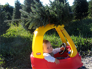 Greene Tree Farm Choose and Cut Fraser Fir Christmas Trees and Wreaths Boone NC Christmas Tree Farms in the Blue Ridge Mountains of North Carolina